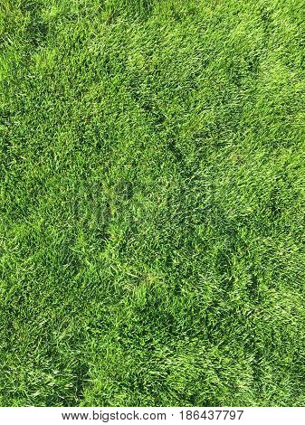 Just green color grass lawn texture background