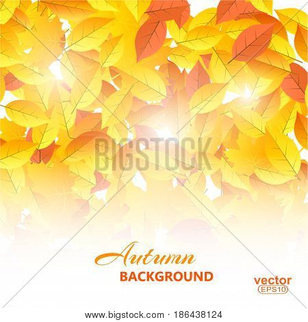 Autumn yellow background with leaves. Vector illustration.