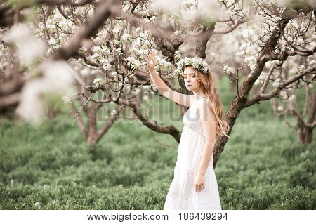 Beautiful blonde teenage girl 14-16 year old with long hair posing in apple orchard. Springtime.
