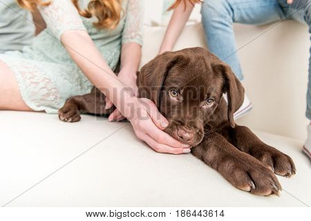 Cropped View Of Woman Playing With Labrador Retriever Puppy At Home