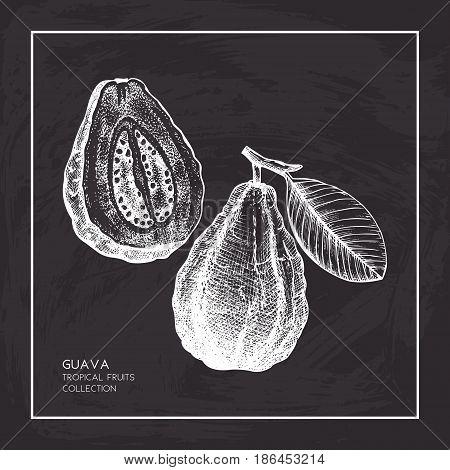 Engraved botanical sketch. Vintage tropical fruit design on chalkboard