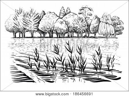 Black and white vector illustration of river landscape with trees, water waves and reflexion. Bank of the river with reed and cattail. Sketchy style.