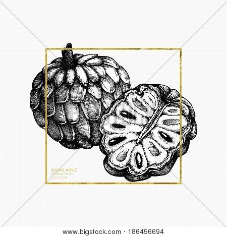 Engraved botanical sketch. Vintage tropical fruit design.