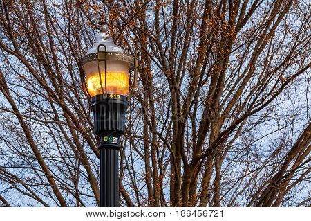 Street lamp on the background of the elm branches in autumn day