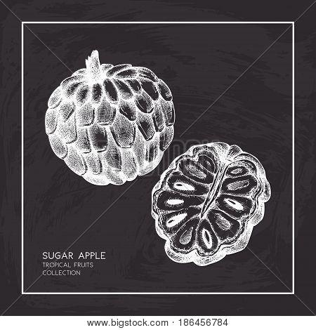 Engraved botanical sketch. Vintage tropical fruit design