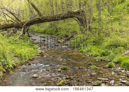 A scenic brook with a down tree during spring.