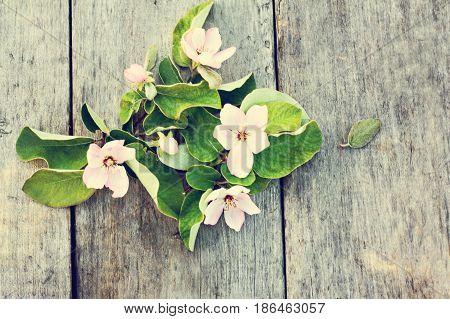 Spring Flowering Of Trees.