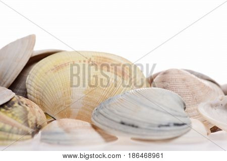 Conch Shell In Selective Focus Isolated On White