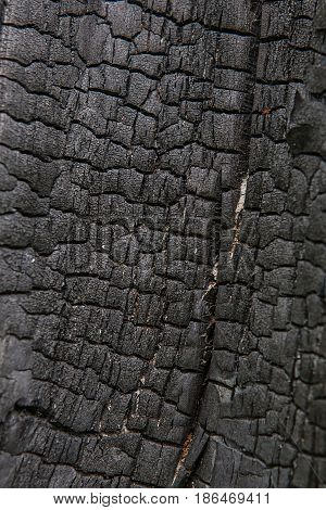 Old Wood Tree Trunk Textured Pattern