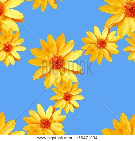 Adonis Texture of flowers. Seamless pattern for continuous replicate. Floral background photo collage