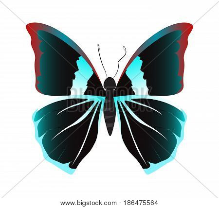 Isolated beautiful butterfly on white background. Black colors.