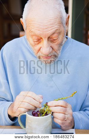 Senior man eating grapes