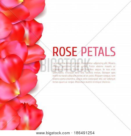 Red rose petals border isolated on white background. Realistic vector illustration. Wedding invitation or greeting card template