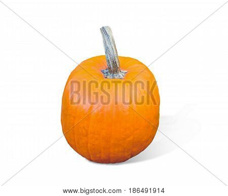 Pumpkin isolated on white background. Fresh and orange.Top view of a pumpkin isolated for Helloween, Thanksgiving day, other autumn Holidays.