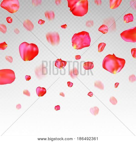 A lot of falling red rose petals on transparent background. Vector illustration.