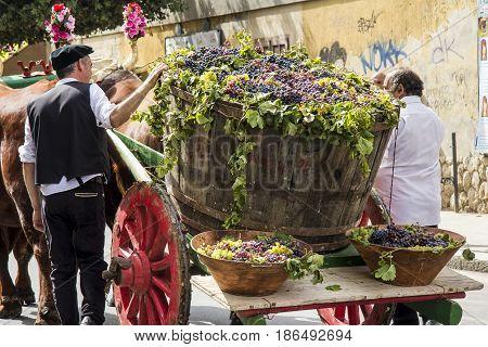 SELARGIUS, ITALY - SEPTEMBER 8, 2013: Ancient Selargino wedding - wagon with a pinch of grapes - Sardinia