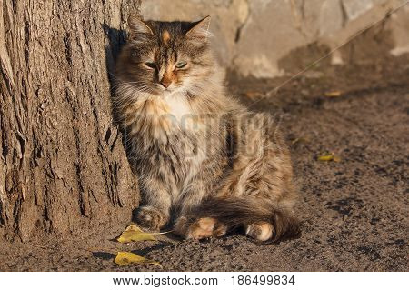 Homeless cat basking in the rays of the autumn sun