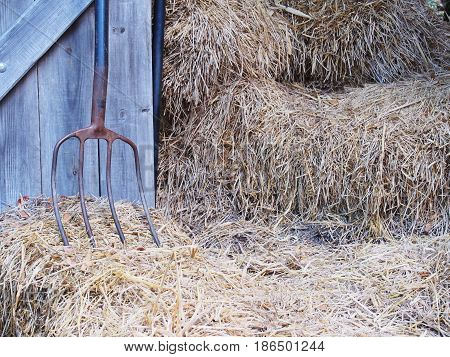 Farmhouse background. Iron rake wooden door and rice straw.