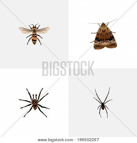 Realistic Spinner, Wisp, Butterfly And Other Vector Elements. Set Of Hexapod Realistic Symbols Also Includes Fly, Tarantula, Spider Objects.