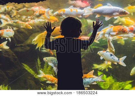 Silhouette Of A Boy Looking At Fish In The Aquarium
