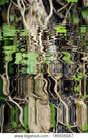 a trunk of tree reflected in the water