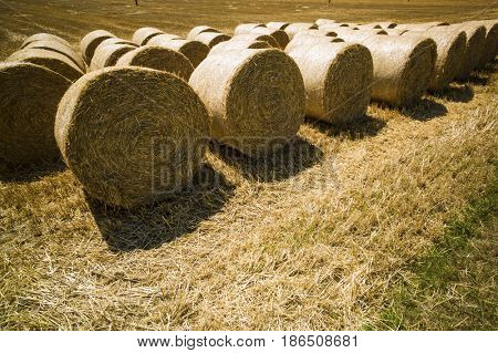 bales of straw and grain in a field