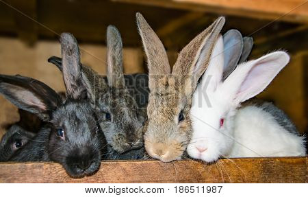 Four small pet rabbit peeking out of the cage