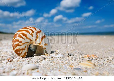nautilus sea shell on golden sand beach with ocean waves in soft sun light, shallow dof