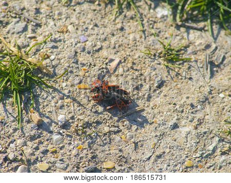 A bunch of multicolored beetles on the ground