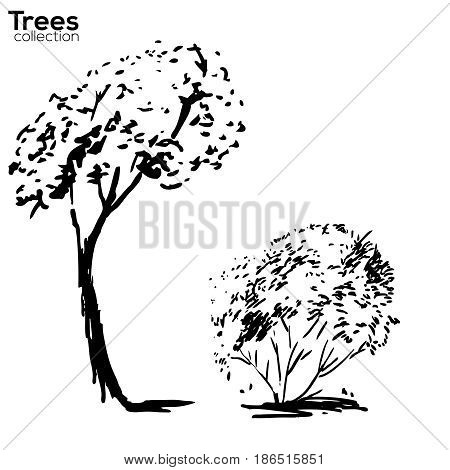 Vector Trees collection. Ink sketched trees silhouettes