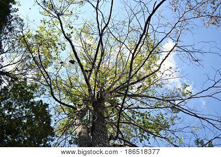 dia ensolarado e uma árvore com poucas folhas