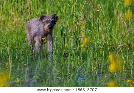 Homeless dog in a swamp