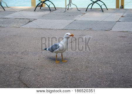 "The bird is a cormorant on the waterfront of the sanatorium ""Aivazovsky"" in Partenit. Crimea Ukraine. May 2008"