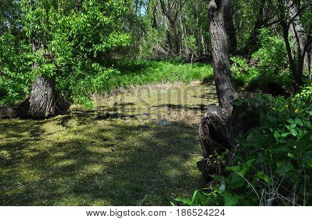 Lake, nature, countryside, forest, swamp, grass, tree, green