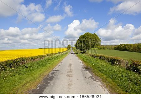 Country Road In Springtime