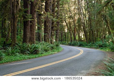 The two lane road cuts a path through old growth forest in Hoh Rain Forest National Park