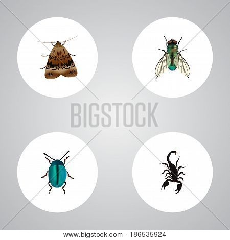 Realistic Butterfly, Bug, Poisonous And Other Vector Elements. Set Of Animal Realistic Symbols Also Includes Bug, Insect, Fly Objects.