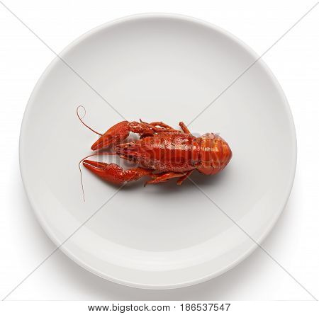 Boiled Crayfish On White Ceramic Plate Isolated On White