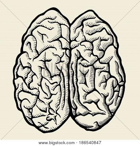 Human brain. Vector hand drawn illustration. Isolated on beige