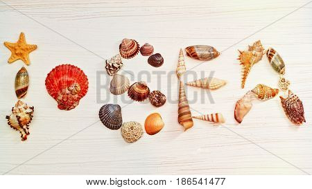 Horizontal top view I love sea tagline made of shells with conch instead the heart sign