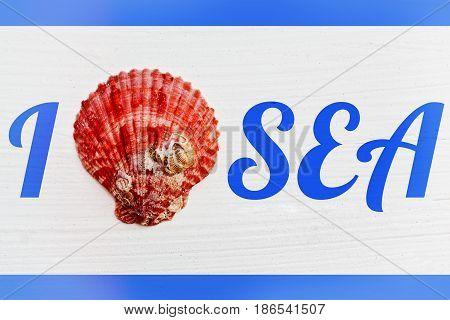 Rude painted textured wooden surface with tagline I love sea with a sea shell instead of heart sign