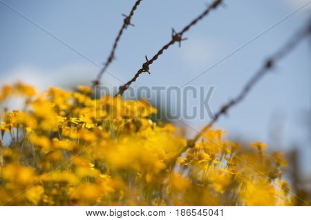 barbed wire fence detail with wild flowers in foreground