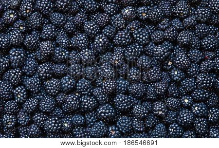 Background from fresh Blackberries close up. Lot of ripe juicy wild fruit raw berries lying on the table. Top view Flat lay