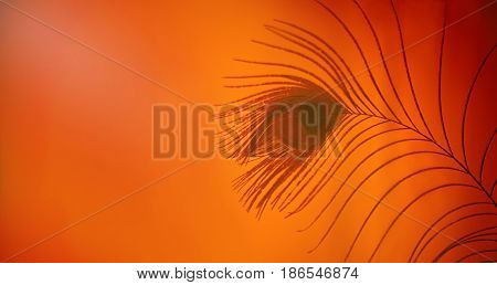 Panoramic exotic Beautiful Background with peacock feather. Abstract wallpaper. Art Web Banner. Wide Screen Horizontal Image Copy Space