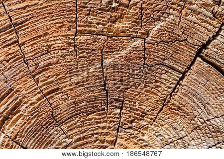 Cross Section Tree