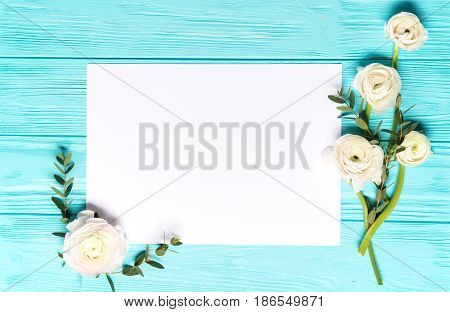 Light Mint Background With Gentle White Ranunculus Flowers, flat lay , Top View