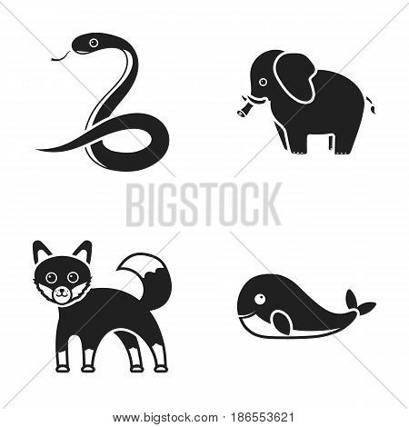 Whale, elephant, snake, fox.Animal set collection icons in black style vector symbol stock illustration .