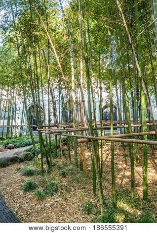 Shanghai, China - Nov 4, 2016: Gucheng Park (Northeast Gate) - An ornamental bamboo grove.