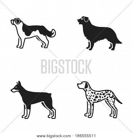 St. Bernard, retriever.doberman, labrador. Dog breeds set collection icons in black style vector symbol stock illustration .