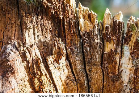 old split with an ax tree with irregular structure. Firewood, photographed close-up. Small depth of field. on wood visible traces of decomposition and destruction of insects.